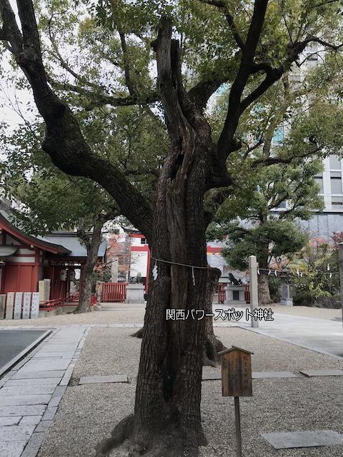 大阪「御霊神社」の御神木「肌まもりの木」