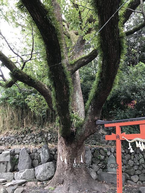 瓢箪山稲荷神社の御神木