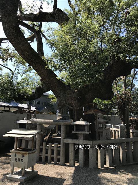 杭全神社の楠