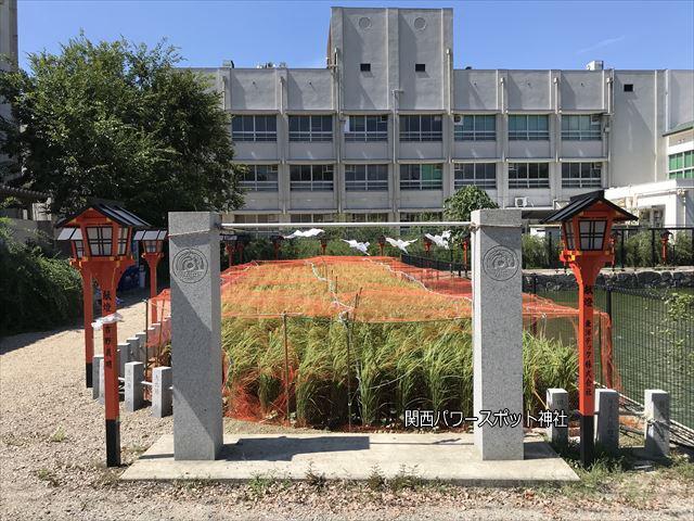 杭全神社前の弁天池横の稲栽培
