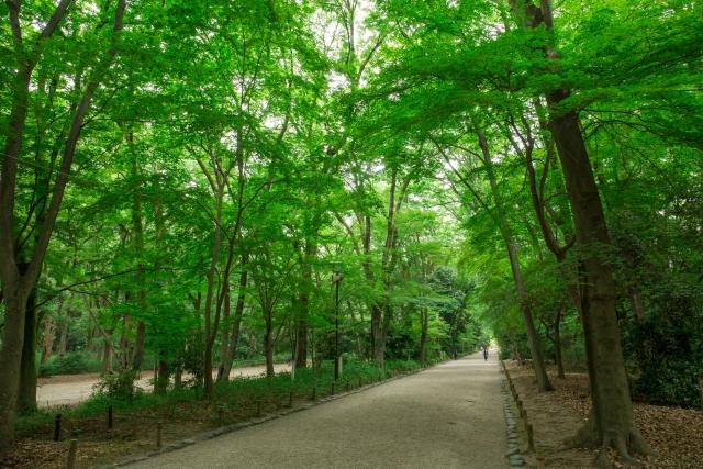 下鴨神社「糺の森」