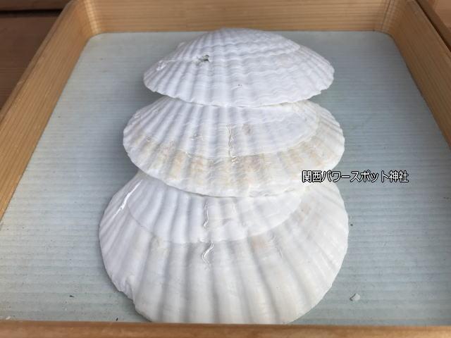 姫嶋神社「はじまりの碑」に祈願する時に使用する貝殻