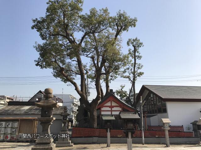 姫嶋神社の末社「楠社」を横から御神木と一緒に撮影。