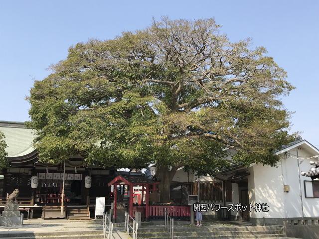 大宮神社境内の「いぼ大神社」と御神木