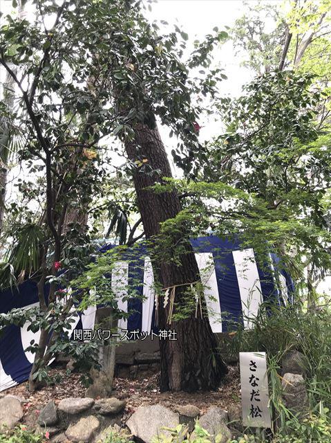 安居神社の「さなだ松」