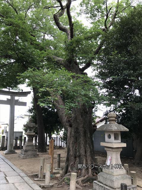 弓弦羽神社の鳥居入ってすぐにある御神木
