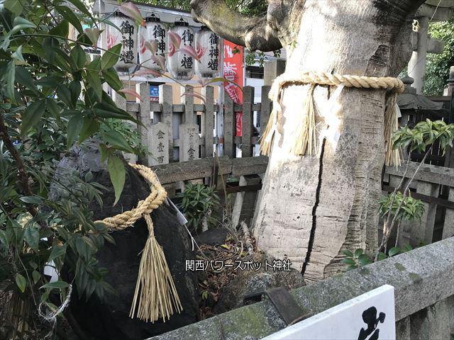 「満足稲荷神社」境内の岩神さまと御神木