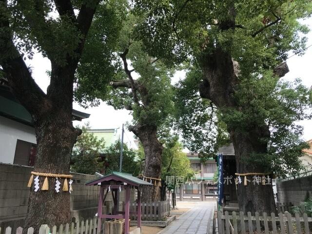 阿倍王子神社境内の御神木